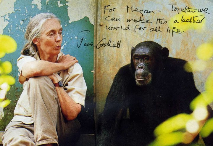 Jane Goodall wrote me a handwritten letter and also included this postcard.